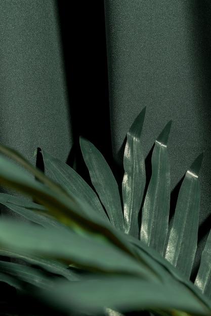 Gros plan d'une plante tropicale verte Photo gratuit