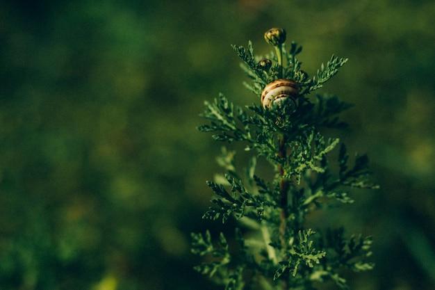 Gros plan, de, plante verte, à, escargot Photo gratuit
