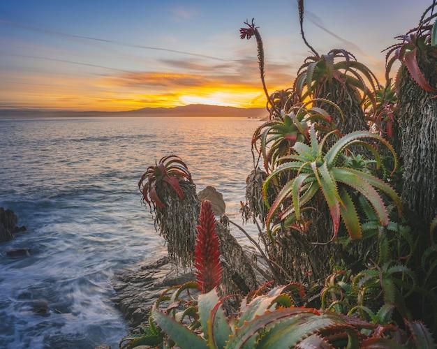Gros Plan De Plantes Tropicales Exotiques Au Premier Plan Et Une Mer Au Coucher Du Soleil Au Loin Photo gratuit