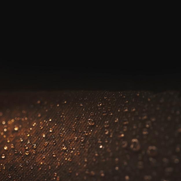 Gros plan d'une plume de paon avec des gouttelettes sur fond noir Photo gratuit