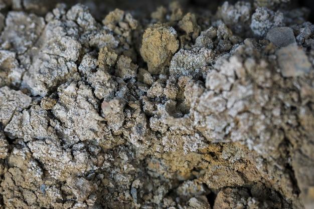 Gros plan, rocher, mousse, mycète Photo gratuit