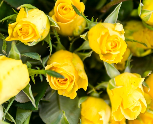 Gros plan de roses fraîches naturelles Photo gratuit