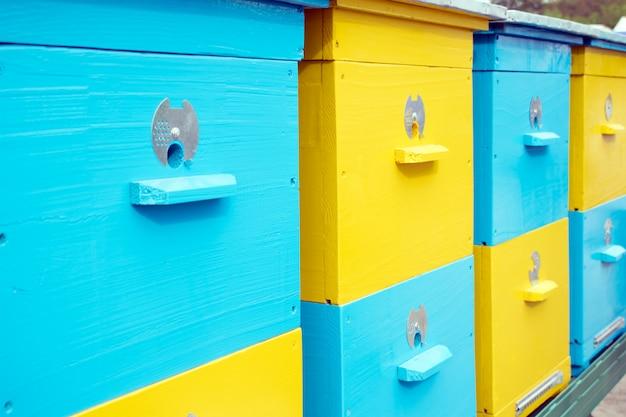 Gros plan de ruches colorées jaunes et bleues Photo Premium