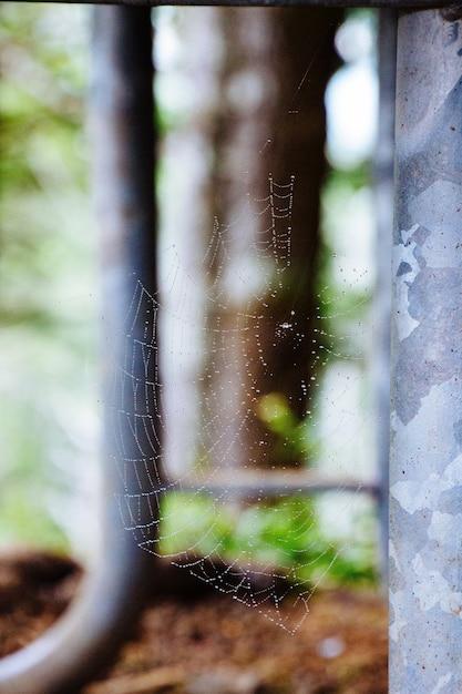 Gros Plan Sélectif D'une Toile D'araignée Photo gratuit