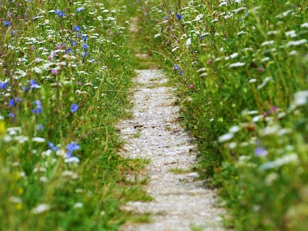 Gros Plan D'un Sentier Rural Entouré De Fleurs Sauvages Magiques Photo gratuit