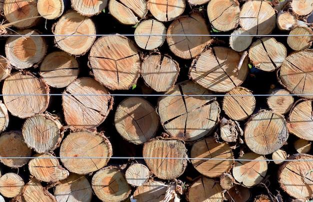 Gros plan, tas, troncs arbres, scierie, vue frontale Photo Premium