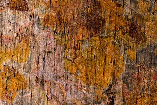 Gros Plan De Texture En Bois Rouillé Photo gratuit