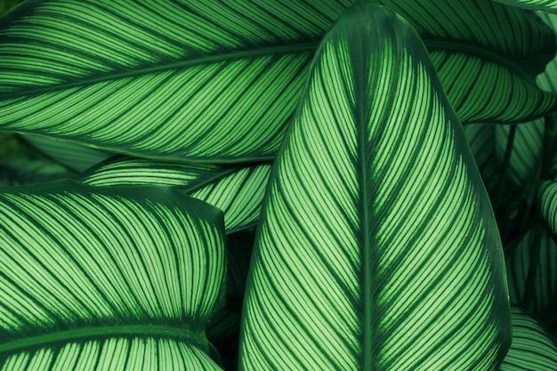 Gros Plan De La Texture De La Feuille Verte Dans La Forêt Tropicale Et Le Travail D'art Design Style Concept éco Nature. Photo Premium