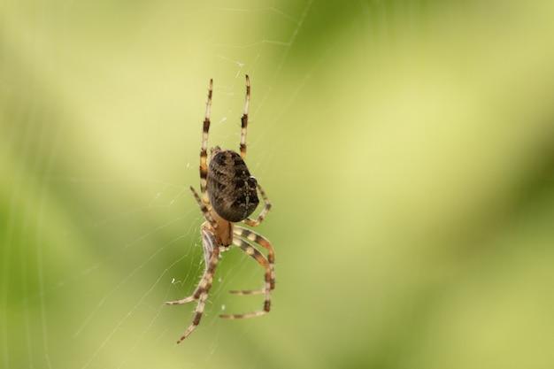 Gros Plan Tourné D'une Araignée Sur Une Araignée Photo gratuit