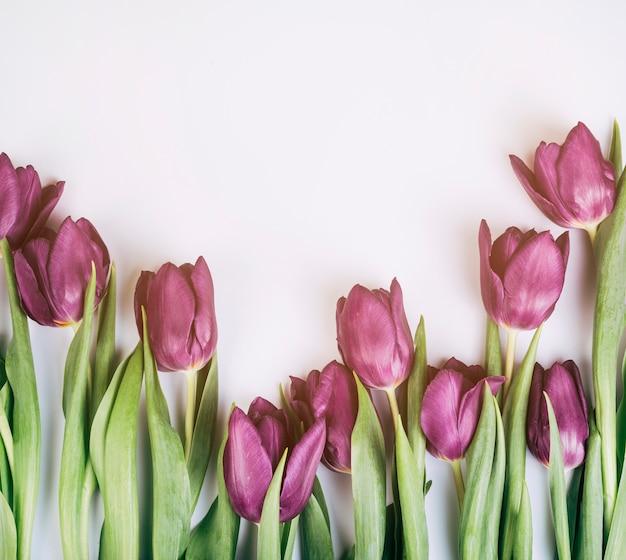 Gros plan, de, tulipes fleur fraîche, sur, blanc, fond isolé Photo gratuit