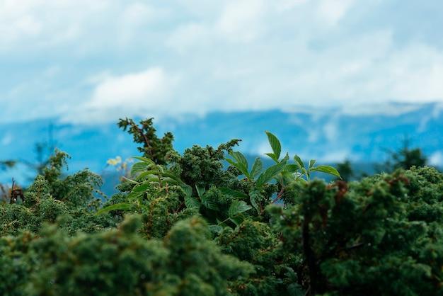 Gros plan de la végétation verte au sommet de la montagne Photo gratuit