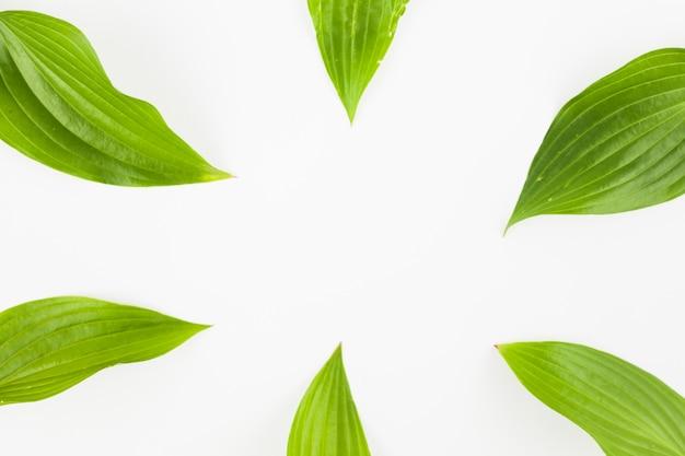 Gros plan, de, vert, feuilles, sur, fond blanc Photo gratuit