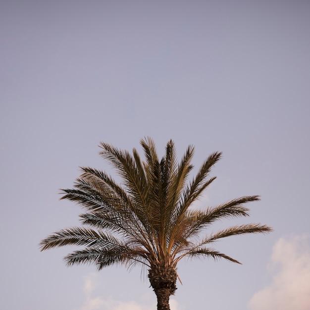 Gros plan, vert, palmier, contre, ciel bleu Photo gratuit