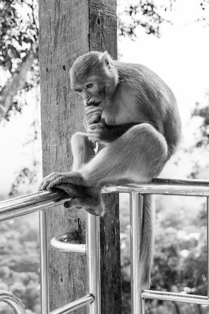 Gros Plan Vertical En Niveaux De Gris Photo De Singe Primate Macaque Rhésus Assis Sur Une Balustrade En Métal Photo gratuit