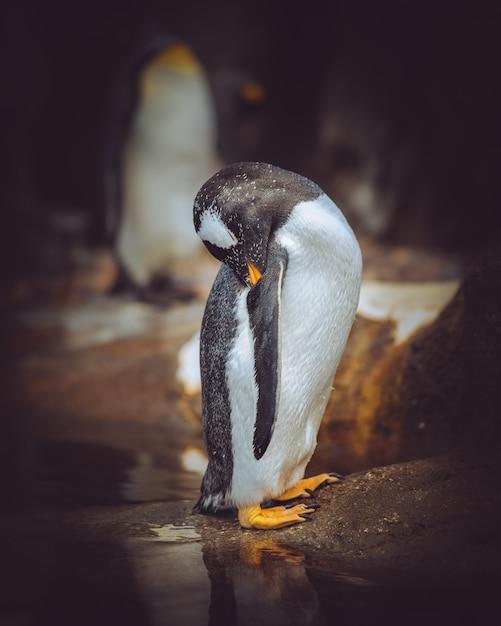 Gros Plan Vertical Tourné D'un Pingouin Se Nettoyer Avec Un Arrière-plan Flou Photo gratuit