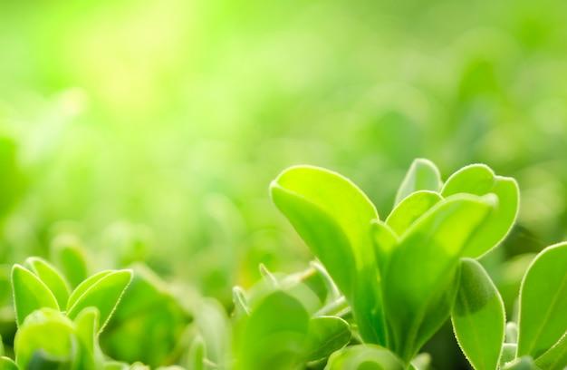 Gros Plan, Vue, Nature, Vert, Feuilles, Verdure, Arrière ...