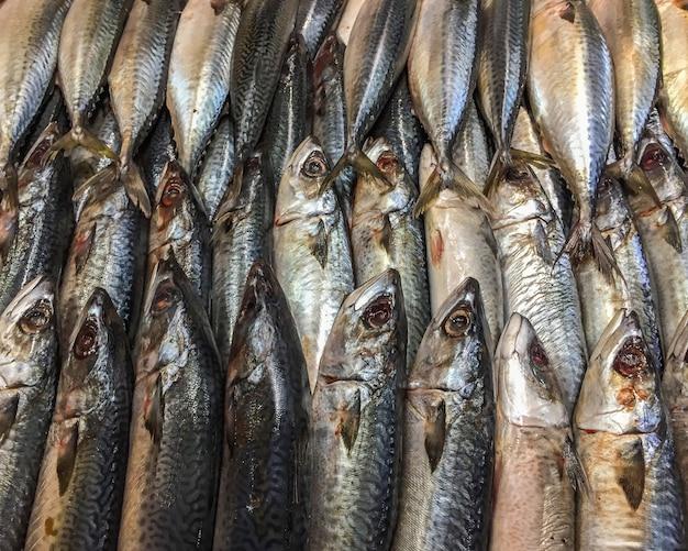 Gros poisson de maquereau mort sur la glace en stand au marché. Photo Premium