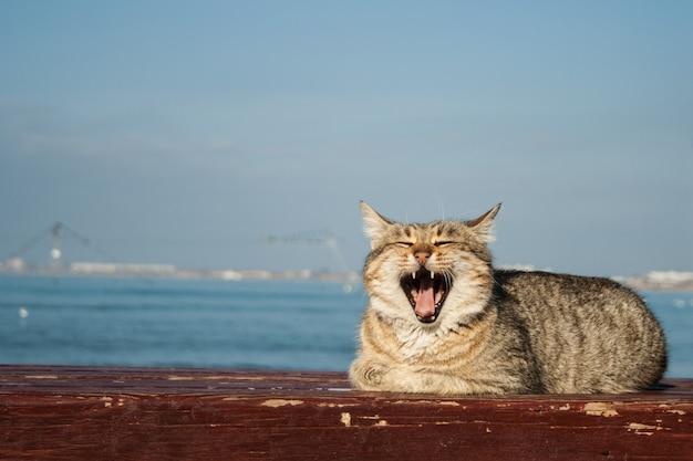 Gros puissant beau chat gris assis sur le banc. à l'arrière-plan se trouve la mer. Photo Premium