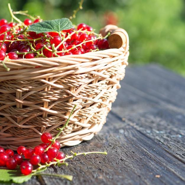 Groseilles mûres rouges dans un panier en bois Photo Premium