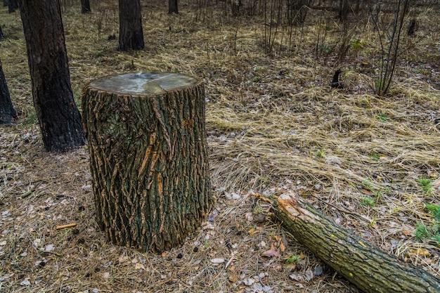Grosse souche d'arbre Photo Premium