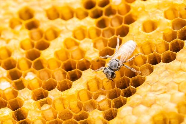 Groupe D'abeilles Sur Shoot Studio En Nid D'abeille. Photo Premium