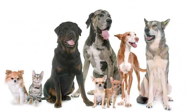 Groupe d'animal de compagnie Photo Premium