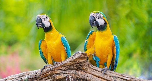 Groupe D'aras Colorés Sur Des Branches D'arbres Photo Premium