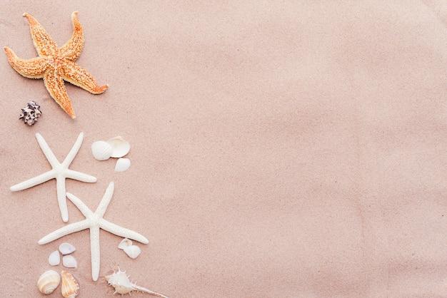 Groupe de beau coquillage et étoile de mer sur fond de plage de sable. Photo Premium