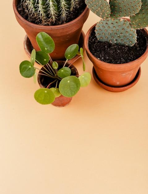 Groupe de cactus dans des pots de fleurs Photo gratuit
