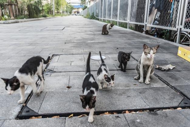 Groupe de chats et chatons de rue mignons Photo gratuit