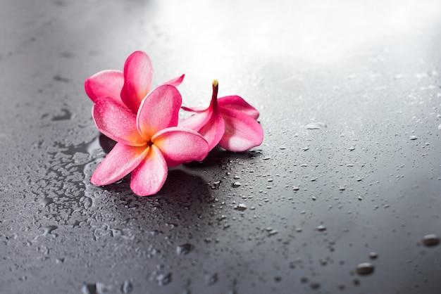 Groupe goutte fond frangipanier rose humide noir Photo Premium