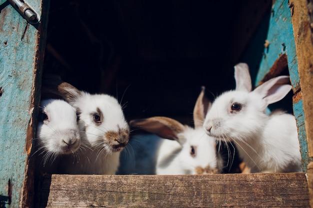 Un Groupe De Jeunes Lapins Dans La Huche Photo Premium