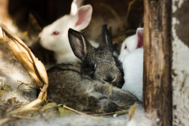 Groupe de lapins à l'intérieur d'un abri à la ferme Photo gratuit