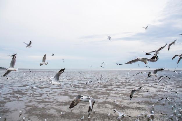 Groupe D'oiseaux De Mouette Volent. Photo Premium