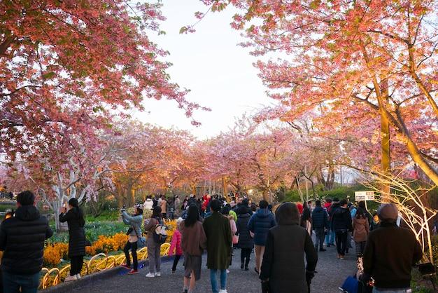Groupe de personnes prenant des photos et se rendant au champ de fleurs de cerisier à nabana no sato, nagoya, japon. Photo Premium