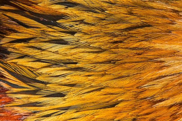 Groupe de plumes marron brillant de certains oiseaux Photo Premium