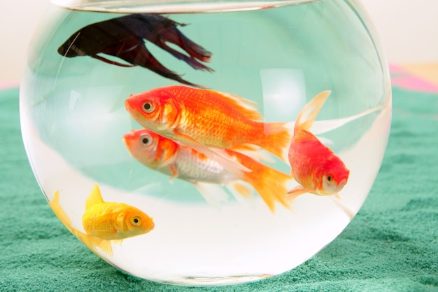 Groupe de poissons dans un bocal à poissons Photo Premium