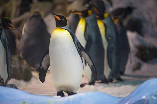 Groupe de roi pingouin Photo Premium
