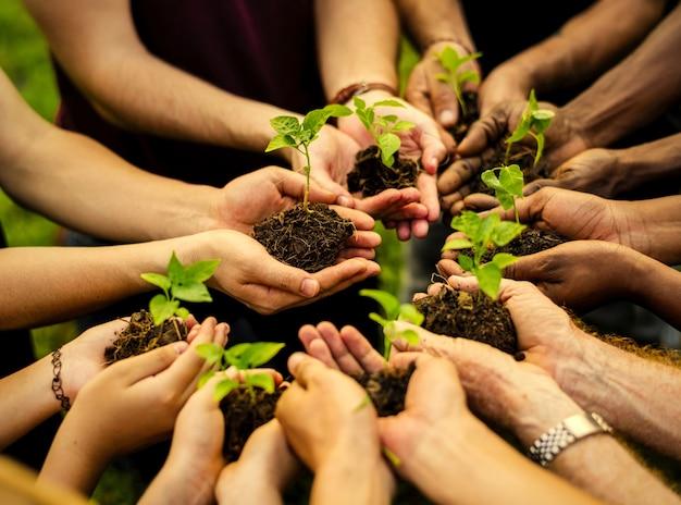 Groupe de volontaires plantant de nouveaux arbres Photo Premium