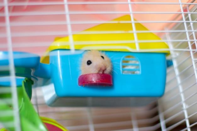 Un hamster moelleux jette un coup d'œil par la fenêtre d'une petite maison dans une cage Photo Premium
