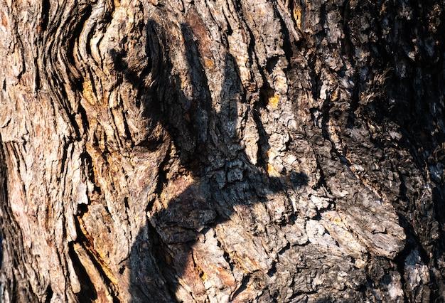 Hand.destroy nature concept idée sauver l'environnement propre sauver fond de terre Photo Premium