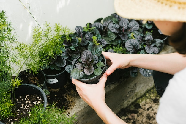 Haute angle, femme, tenue, plante Photo gratuit