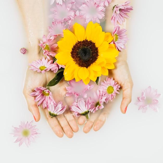 Haute vue angle, de, jaune, et, rose, fleurs, dans, clair, eau blanche Photo gratuit