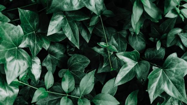 Haute vue angle, de, vert, feuille, plante Photo gratuit