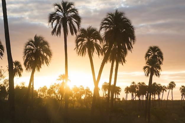 Hauts palmiers et paradis merveilleux avec des nuages au coucher du soleil Photo gratuit
