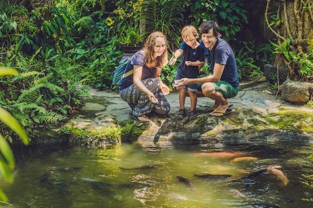 Héhé, Nourrir Le Poisson-chat Coloré Dans Un étang Tropical Photo Premium