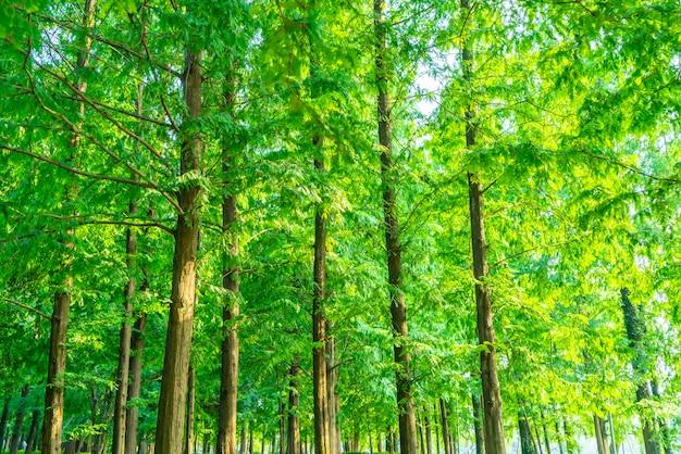 Herbe et bois verts dans le parc Photo Premium