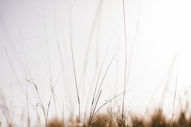 Herbe devant un arrière-plan flou Photo gratuit