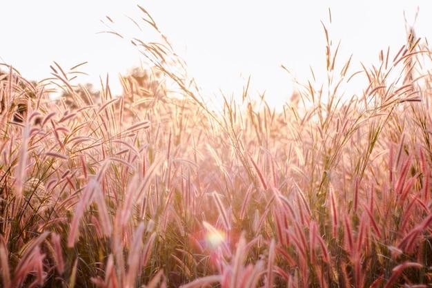 Herbe de fleurs colorées faite avec dégradé pour le fond Photo Premium
