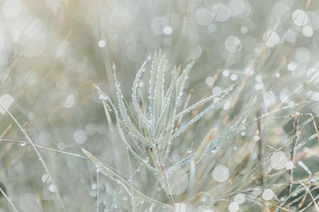 Herbe sur prairie avec des gouttes d'eau rosée dans la lumière du matin au printemps été en plein air macro gros plan, panorama. belle image artistique de pureté et de fraîcheur de la nature, espace de copie. Photo Premium